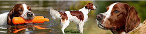 1 Irish Red and White Setter (13 Monate) (29.03.2014)